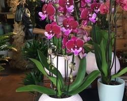 Montage d'orchidées