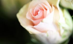 Kuipers - Fleuriste - Nos réalisations